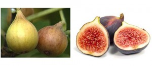 figs-male-sperm-healing