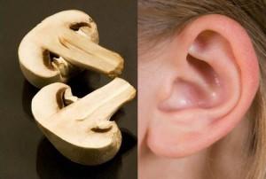 mushroom-ear-healing