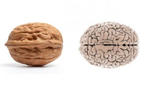 walnut-brain-foods